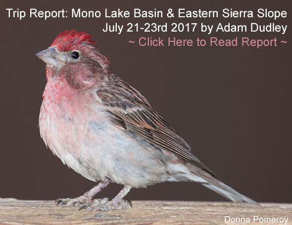 Mono Lake and Sierra Trip Report link